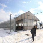 上士幌のパイプハウス簡易牛舎